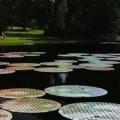 CD-na-vode-5.jpg