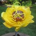 cveti-iz-oxodov-1.jpg