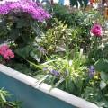 flower-garden-of-baths-6.jpg