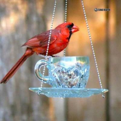 Оригинальные идеи кормушек для птиц из чашки и блюдца