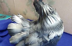 Красивые поделки птиц из пластиковых бутылок