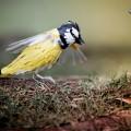 ptici-iz-bumagi-7.jpg