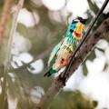 ptici-iz-bumagi-8.jpg