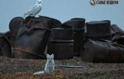 Очистка Арктики от мусора и металлолома.