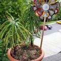 zveti-iz-pivnix-krichek-10.jpg