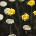 zveti-iz-pivnix-krichek-8.jpg