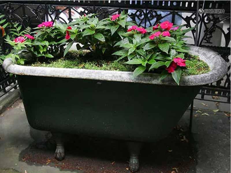 Фото по клику цветника из ванны: