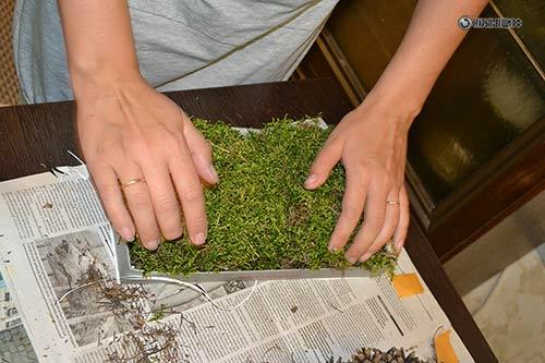 Как сохранить мох для поделок 2652