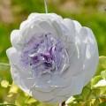 cveti-iz-oxodov-12.jpg