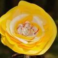 cveti-iz-oxodov-8.jpg