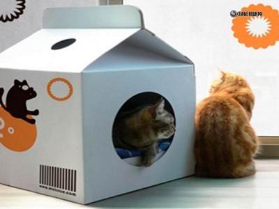 Домик для кошки из коробки Diy