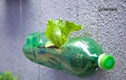Вертикальный сад из пластиковых бутылок в Сан-Паулу