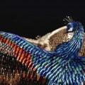 ptici-iz-nogtey-6.jpg