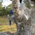 slon-iz-kamney-12.jpg
